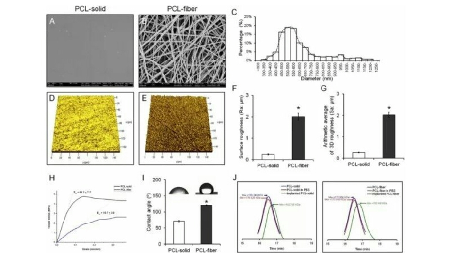 Effects of the Fibrous Topography-mediated Macrophage Phenotype Transition on the Recruitment of Mesenchymal Stem Cells: An in V